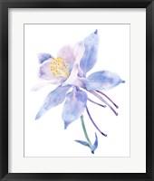 Framed Columbine Bloom II