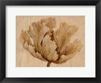 Framed Sepia Tulip on Birch I