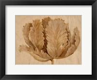 Framed Sepia Tulip on Birch II
