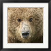 Framed Bear Life I