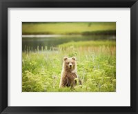 Framed Bear Life VII