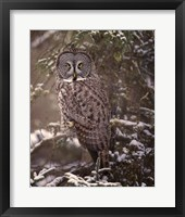 Framed Owl in the Snow I