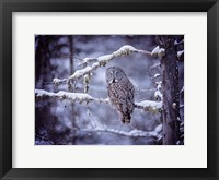 Framed Owl in the Snow II