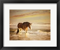 Framed Sunkissed Horses V