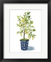 Framed Fruit Tree II