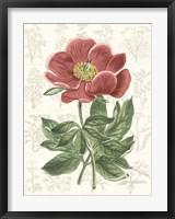 Framed Peony Flower Garden II
