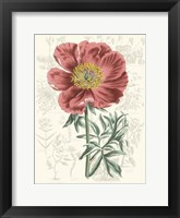 Framed Peony Flower Garden IV