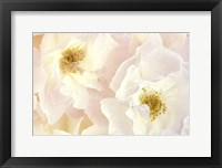 Framed Pink Blossoms II