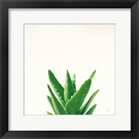 Framed Succulent Simplicity V Neutral
