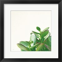 Framed Succulent Simplicity IV Neutral