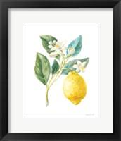 Framed Floursack Lemon I on White