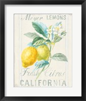 Framed Floursack Lemon II