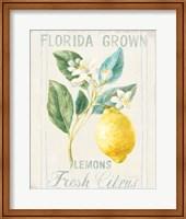 Framed Floursack Lemon I