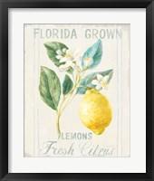 Floursack Lemon I Framed Print