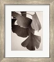 Framed Gingko Sepia