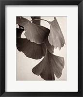 Framed Gingko Sepia