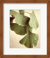 Framed Gingko Color