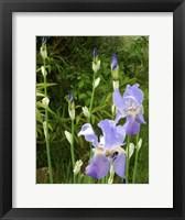 Framed Blue Irises
