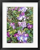 Framed Climbing Lilac Rose