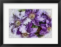 Framed Dreams of Lilac Clematis