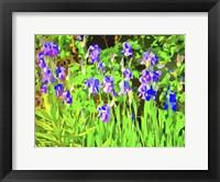 Framed Iris Drifts Into Pop Art