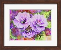 Framed Primula Lilac Fantasy