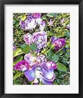 Framed Soft Lilac Rose