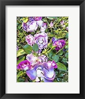 Framed Soft Lilac Rose