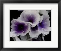 Framed Vainglorious Violet