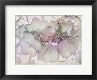 Framed Violets Are Not Always Blue