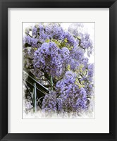 Framed Wisteria Clouds