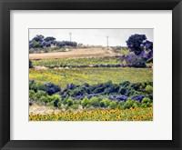 Framed Sunflower Landscape