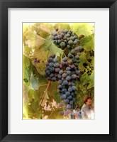 Framed Waiting For Wine