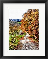 Framed Walnut Avenue In Autumn Umbria