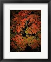 Framed Fall Colours 1