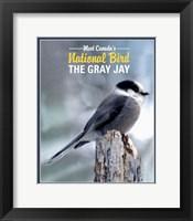 Framed Gray Jay Canada's National Bird