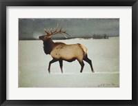 Framed Silver Mist Elk