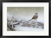 Framed Snowscape Wc Sparrow