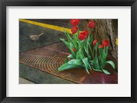 Framed Sparrow,Tulips And Sidewalk