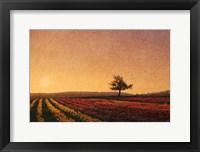 Framed Lone Tree Tulips