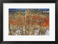 Framed Red Yellow Willow
