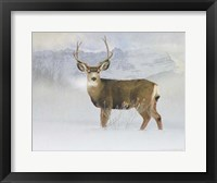 Framed Bucky Deer Snow