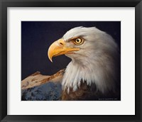 Framed Bald Eagle Study