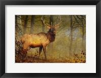 Framed Aspen Forest Bull Elk