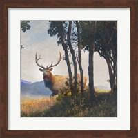 Framed Mountain Elk