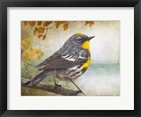 Framed Wetland Warbler