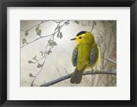 Framed Wetland Wilson's Warbler
