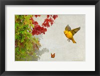 Framed Butterfly And Warbler