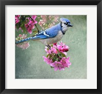 Framed Bluejay Amid Blooms