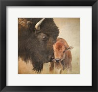 Framed Bison Mother And Calf